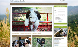 Maple Mountain doodles in Utah - Bernedoodles, Poodles and Borderdoodles
