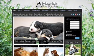 Irish Doodles and Goldendoodles by Mountain Blue Doodles in Utah  Breeder of Irish Doodles and Goldendoodle Puppies
