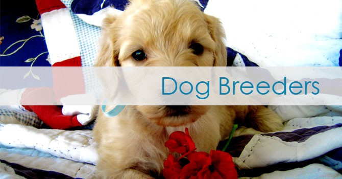 dog breeder websites